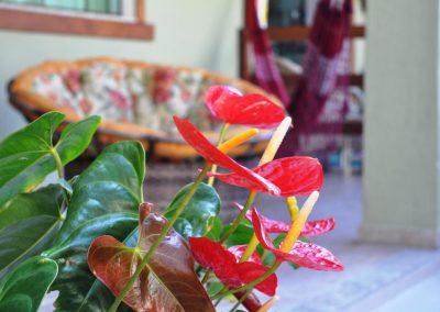 plantinhas - pousada encanto do pero - cabo frio